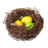 Nest with easter eggs. And feathers solated on a white background Stock Photography