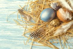 Nest with Easter eggs on blue wooden background, top view with copy space royalty free stock photo