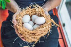 Nest with Easter Eggs in hands Royalty Free Stock Images