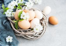Nest with easter eggs. And spring blossom royalty free stock photography