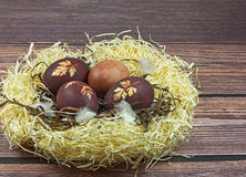 Nest with Easter eggs Stock Image