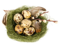 Nest with Easter quail eggs Stock Photos