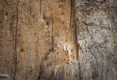 Nest in een oude rotte boom Royalty-vrije Stock Foto's