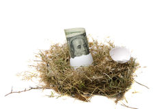 Nest Egg. A fat stack of $100.00 dollar bills rolled up in a bird egg in a bird nest isolated on white with room for your text. represents the concept of nest stock photos