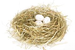 Nest with egg Royalty Free Stock Photography