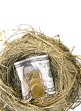Nest Egg. A robin's nest with American money, nest egg a supply of money or gold stored or hidden for future use stock photography