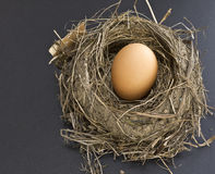 Nest Egg. A bird's nest complete with brown egg symbolizing security, parenting, birth, rebirth as well as saving for retirement, nest egg investments and royalty free stock photo