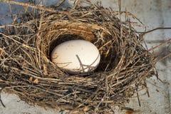 Nest with egg stock photos