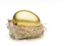 Nest egg. Gold egg resting in an undersized nest shot on a white background royalty free stock photography