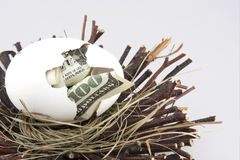 Nest egg 3. $100 bill hatching from egg in a nest stock images