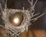 Nest Egg. Branch with small nest, containing a bright golden egg. Taken with a Panasonic FZ30 stock images