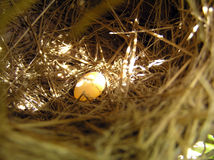Nest and egg Stock Image