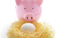 Nest egg Royalty Free Stock Photo