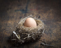 Nest egg. A birds nest filled with a large egg Stock Photos