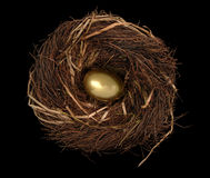 Nest Egg on Black Royalty Free Stock Image