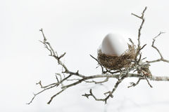 Nest Egg with Branch Stock Images