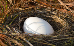 Egg in chicken coop. Chicken coop and eggs in the grass in the background Stock Image