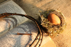 Nest and egg Royalty Free Stock Photo