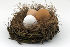 Nest egg diversification. A nest contains three different kinds of eggs against white background, concept of diversity in retirement funds or savings for maximum Royalty Free Stock Image