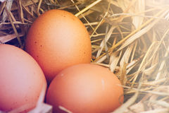Nest egg. Eggs, three eggs in the nest of dry grass. Light shines style makes vintage Stock Photo
