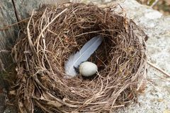 Nest with egg. And feather on the copping of a well stock image