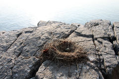 Nest and egg herring gull on a rock Royalty Free Stock Image