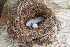 Nest with egg. Nest with a white egg and a feather royalty free stock images