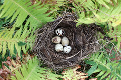 Nest with egg of wild bird outdoors Stock Photo