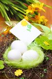 Nest with eggs Royalty Free Stock Image