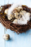 Nest with eggs Royalty Free Stock Photos