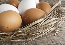 Nest with eggs. Eggs at hay nest in chicken farm Royalty Free Stock Image
