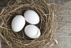 Nest with eggs. Nest with easter eggs on white Stock Photos