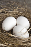 Nest with eggs. Nest with easter eggs on white Stock Images