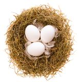 Nest and eggs. Three chicken white eggs and feathers in a nest from a dry grass on a white background Stock Photos