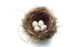 Nest and eggs stock image