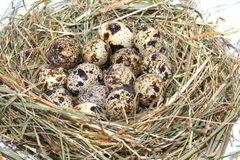 A nest with eggs Stock Photography