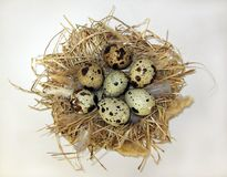Nest and eggs. royalty free stock images