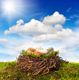 Nest with eggs and birds feather over green grass Stock Photos