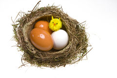 Nest with eggs and chicken Royalty Free Stock Images