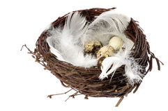 Nest with eggs and feathers. Bird nest with eggs and feathers. isolated on the white background Royalty Free Stock Photography
