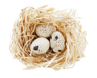 Nest with eggs isolated Royalty Free Stock Photo