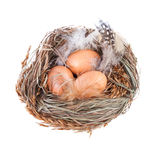 Nest with Eggs isolated on white Royalty Free Stock Photo