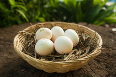 The nest with eggs. The little five eggs on the nest stock photos