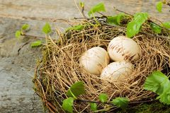 The nest Royalty Free Stock Photography