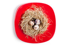 Nest with eggs on a red plate Stock Photography