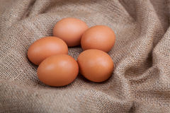 Nest with eggs, on sacking. Nest with eggs on sacking Royalty Free Stock Images