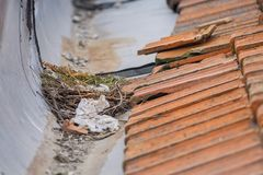 Nest with eggs of sea gulls. On the roof Royalty Free Stock Photography