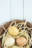 Nest Eggs. Three colored, spotted eggs in a nest Royalty Free Stock Images