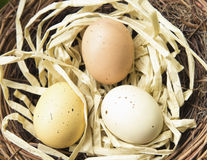 Nest Eggs. Three colored, spotted eggs in a nest Stock Photos
