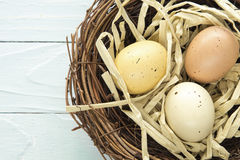 Nest Eggs. Three colored, spotted eggs in a nest Stock Images